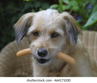 Sweet dog with sausage in its mouth