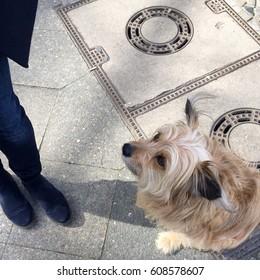 Sweet dog sitting on the pavement