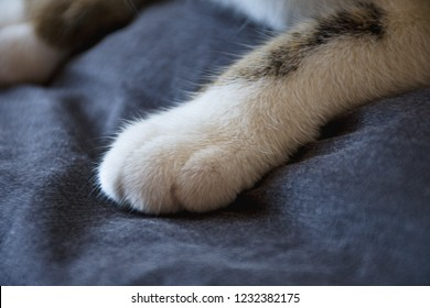 Sweet domestic cat in different poses. Almost White Cat - legs.