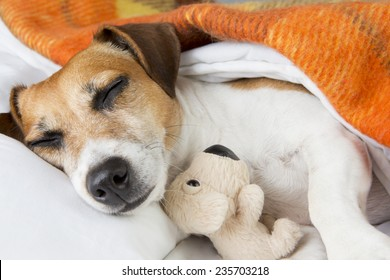Sweet dreams with little toy friend