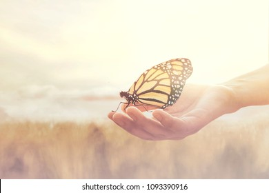sweet encounter between a human hand and a butterfly