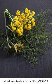Sweet fennel, medicinal herb