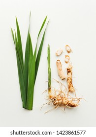 Sweet flag or calamus roots and leaves on white wooden background. Shallow dof.