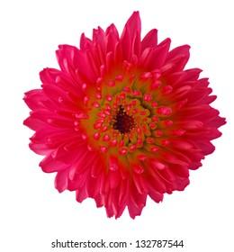 sweet flora on white isolate background