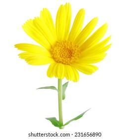 sweet flower on white isolated background