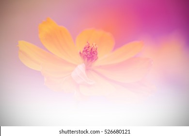 Sweet flower in soft and blur style for texture background.