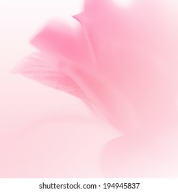 sweet flowers petal in soft style for background