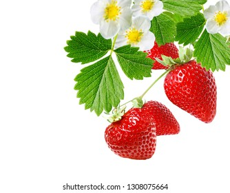 sweet fresh garden strawberries