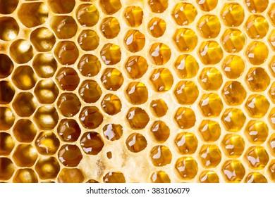 Sweet fresh honey in honeycomb frame