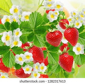 sweet garden strawberry
