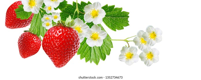 sweet garden strawberry on white