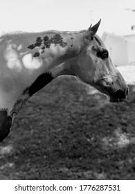 Sweet gelding standing in front of home