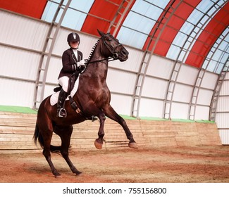 A sweet girl jockey rides a horse in a covered arena. Training candles, stand on hind legs. A pedigree horse for equestrian sport.