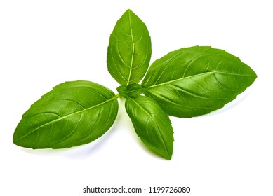 Sweet Green Basil Leaves Herb Spice, closeup, isolated on a white background. Top view