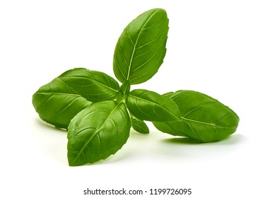 Sweet Green Basil Leaves Herb Spice, closeup, isolated on a white background