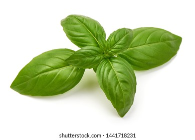 Sweet Green Basil Leaves, Herb, Spice, close-up, isolated on white background.