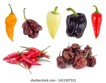 Sweet and hot pepper variety collection from left to right : Fatali yellow, 7 pot chocolate, feher ozon paprika, purple bell pepper, red chile, tabasco pepper, and moruga scorpion chocolate