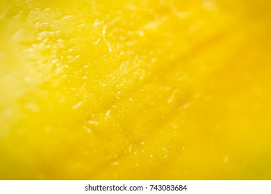 Sweet juicy yellow mango pulp cross-section. The texture of the flesh of a mango, shot with selective focus, macro full-frame horizontal view.