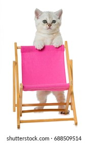 Sweet kitten with a deck chair