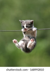 Sweet kitten hanging on a wash-line