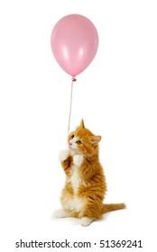 Sweet kitten holding a pink balloon. Taken on a white background.