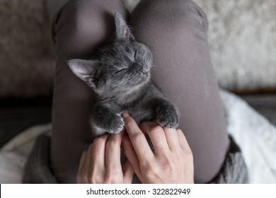 Sweet Kitten taking a nap