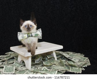 Sweet Kitten wearing a dollar bill bow with money draped around her.