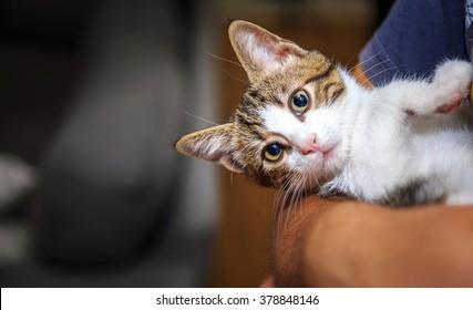The Sweet Little Baby Cat on Hug