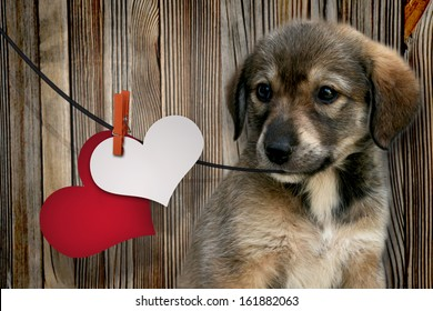 Sweet little dog holding a rope with a heart