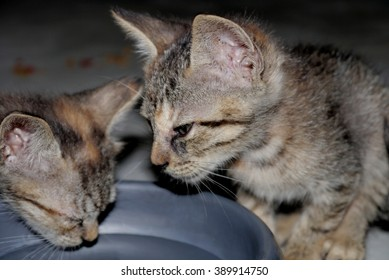 sweet Little gray cats