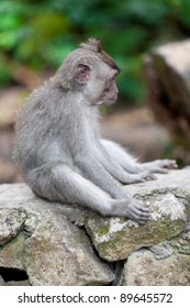 Sweet Little Monkey - The Everyday Life