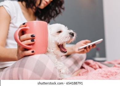 Sweet little white dog yawning on knees young woman in pajama chilling on bed with a cup of tee. Enjoying home comfort with pets, cheerful mood