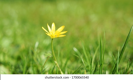 sweet little yellow flower in the lush grass