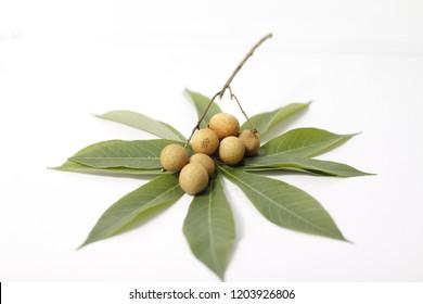 a sweet longan fruits with tapioka leaf.