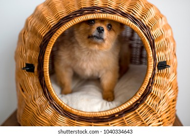 Simple Fluffy Canine Adorable Dog - sweet-lovely-adorable-new-born-260nw-1040334643  Picture_55555  .jpg