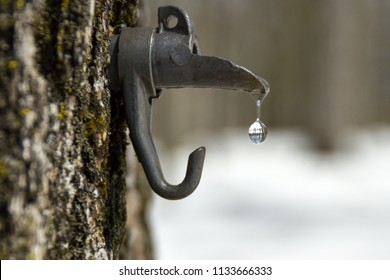 sweet maple water dripping from a spout tapped in a tree, magnifying the forest of the background.