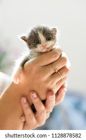 sweet newborn grey kitten in the  hands