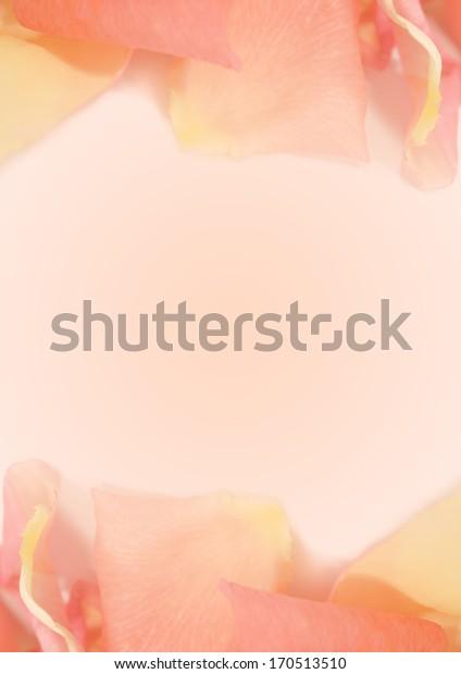 sweet orange petal rose soft background
