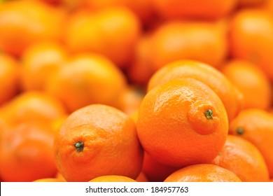 Sweet oranges fruits( mineola) close up.