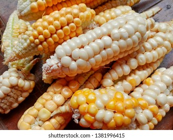 Sweet organic pop corn cobs on rustic wooden table background. Fresh sweetcorn from home farm - raw cobs of corn plant. Nature healthy food grain vegetable eat concept. Tasty small natural corn cobs