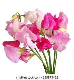 Sweet pea flowers isolated on white background
