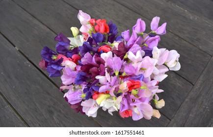 Sweet pea flowers on black wooden table.