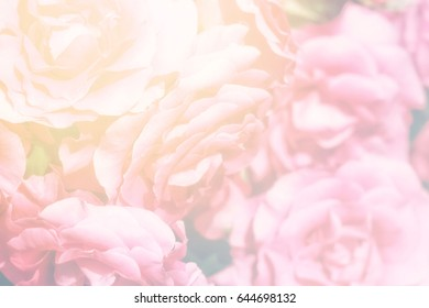 Sweet pink roses background, best to use for wedding, valentine, lovely time or any romantic  opportunity.