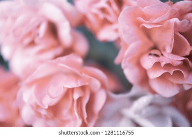 sweet pink roses in vintage style on mulberry paper texture for romantic and loving concept background