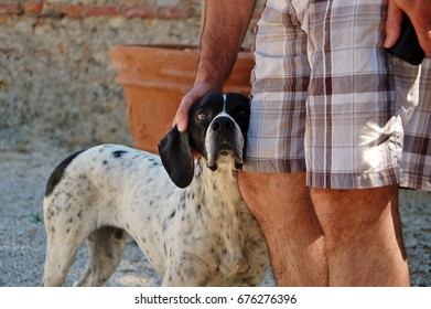 Sweet pointer hunting dog at an Italian vineyard looking at me while getting rubs from a fellow guest
