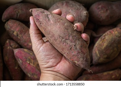 Sweet Potato for sale in the market