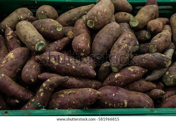 The sweet potatoes from garden of Thailand.