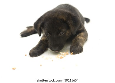 Sweet puppy on a white background