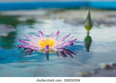 A sweet purple water lily over water surface in natural pool