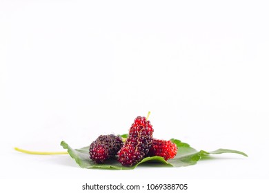 sweet red mulberry with green leaf on white background healthy mulberry fruit food isolated